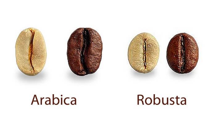 beda bentuk kopi robusta dan arabica